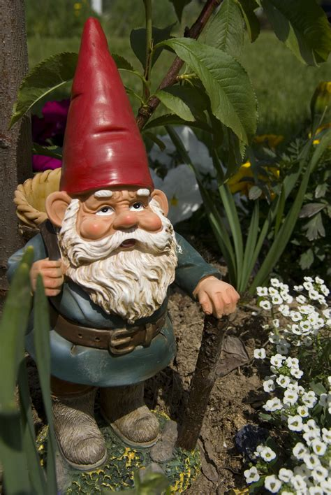 garden gnome lawn order say no to the gnome trace of whimsy
