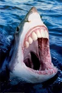 Pumpkin Mask Halloween - sharks have got human teeth the odd blogg