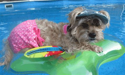 puppy bathing suits 10 stylish and trendy clothes
