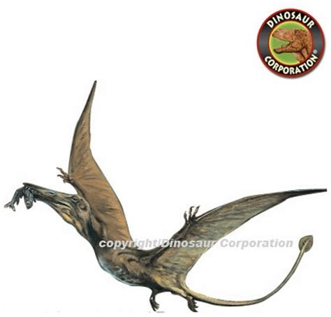 large dinosaur wall stickers large pterodactyl wall sticker
