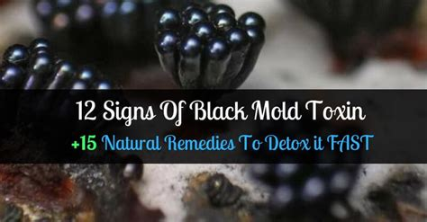 How Do You Detox From Mold by 12 Signs Of Black Mold How To Detox Your From Mold
