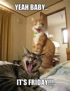 Friday Cat Meme - funny friday cats