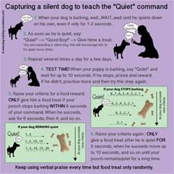how to to stop barking how to stop dog barking teach your dog the quot quiet quot command