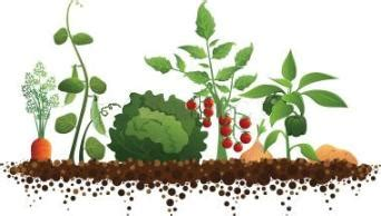 Is Thrive A Joke A Online Health Magazine For Daily No Till Vegetable Garden
