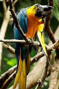 natural treatment for bird parasites birdguide com