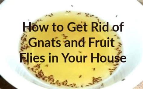 rid  gnats  fruit flies  home remedies