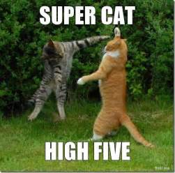 High Five Meme - super cat high five jpg 554 215 548 memes pinterest