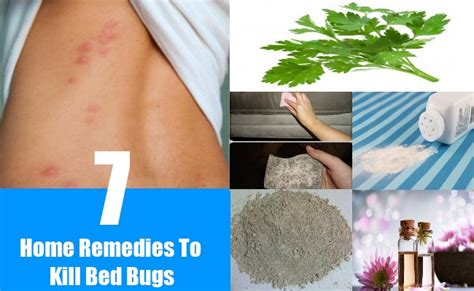 how to kill bed bugs at home 28 images home remedies