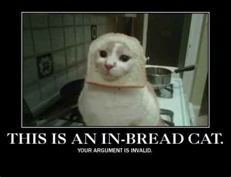 in bread cats the internet has won talkingship video