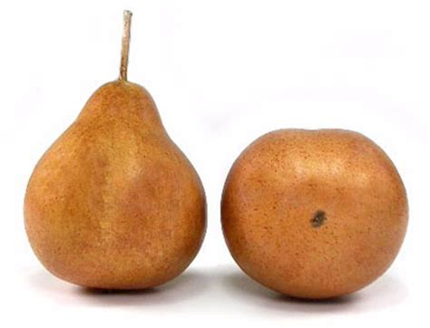 12 best images about pear artificial demi pear box of 12 russett brown fake