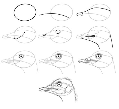 how to a bird how to draw birds step by step
