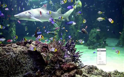 live wallpaper for pc aquarium aquarium hd wallpaper free