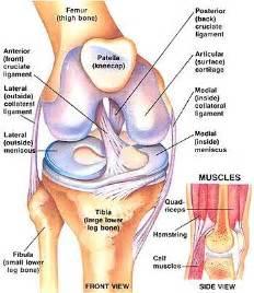 Posterior cruciate ligament pcl injury gorav datta