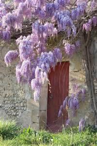 alan titchmarsh s tips on growing wisteria garden life