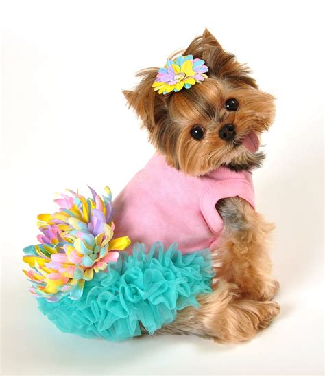 puppy dresses leilani dress all things pet care fashion beautiful turquoise