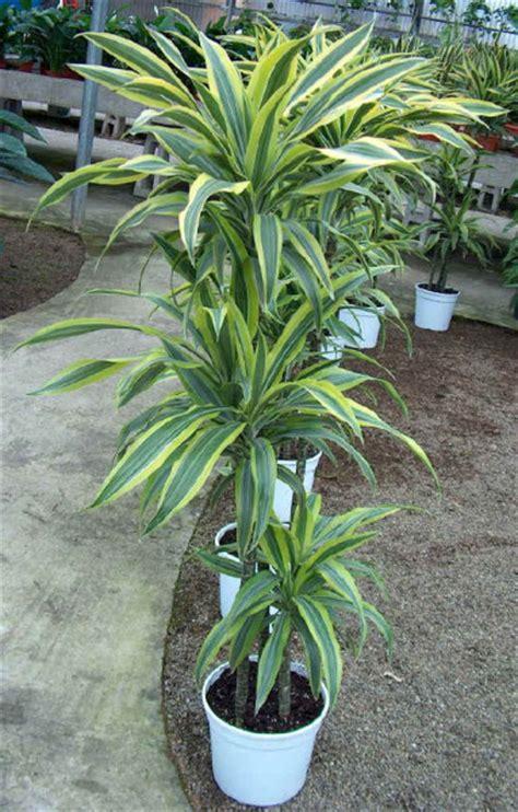 houseplants  clean  air