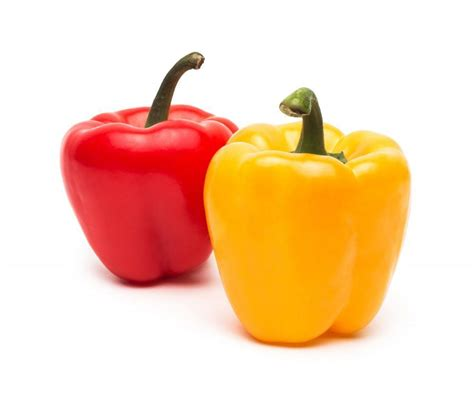 bell peppers for dogs can dogs eat bell peppers authoritydog