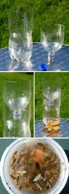 make your own safe wasp trap without attracting and