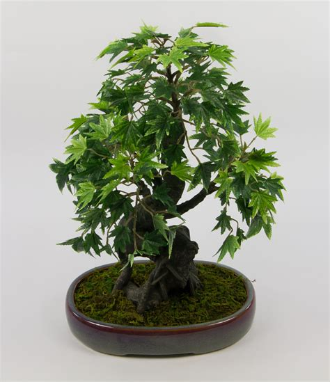 Bonsai Baum Kaufen 38 by Bonsai Japanischer Ahorn 38x28cm Pf Kunstbaum