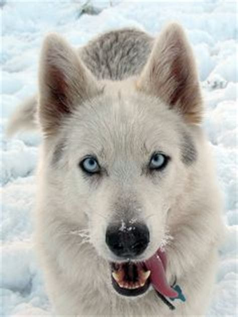 northern inuit price beautiful northern inuit borrow for free koll lowest prices wallpaper