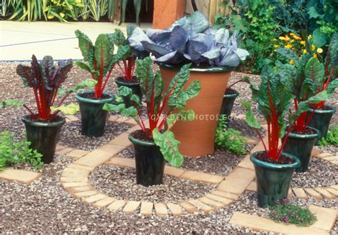 patio vegetable garden containers container vegetable garden on patio plant flower stock