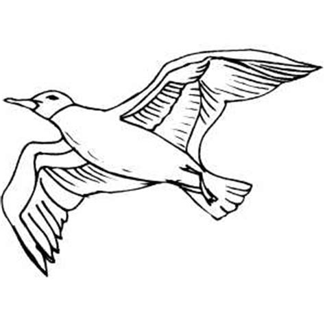 how to draw sea birds seagull coloring sheet