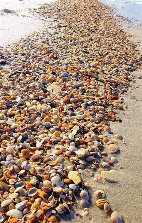 best beaches for seashells beautiful sea shells and discount codes on