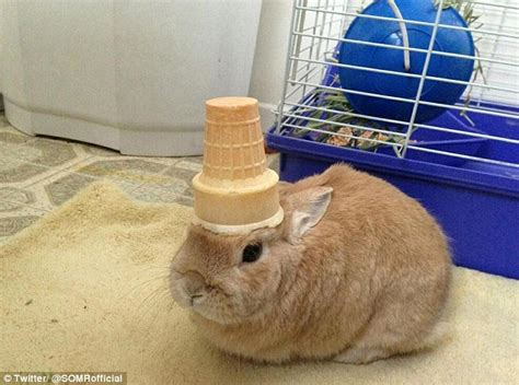 pics of stuff meet vinnie the patient rabbit who balances everything from cones to rubber ducks