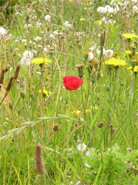 allergic rash to prickly grass weeds ehow uk