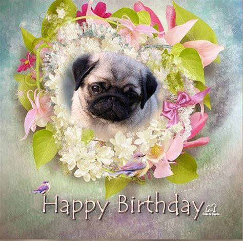 pug birthday ecard 19 best images about pug birthday cards on home pug and happy birthday