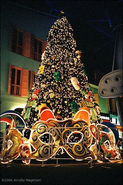 artificial christmas trees rochester ny pin by on trees trees and mardi gras