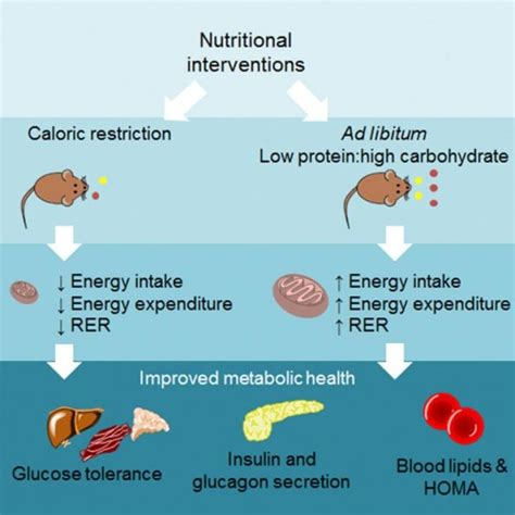 carbohydrates in 600 calories balancing protein and carb intake may work as