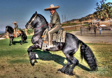 Horse Shower Curtains by The Charro Photograph By Tommy Anderson