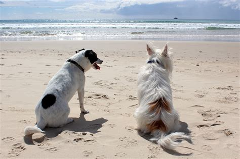 beaches that allow dogs pet friendly beaches cape town dogs allowed