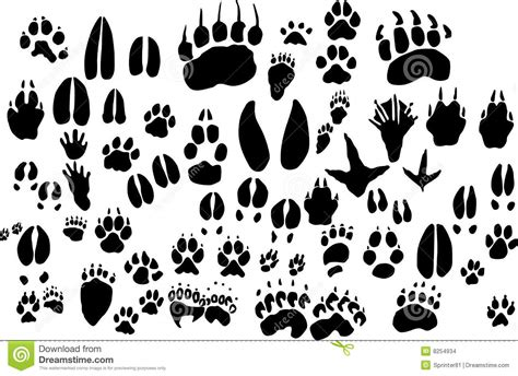 printable animal feet collection of vector outlines of animal foot print stock