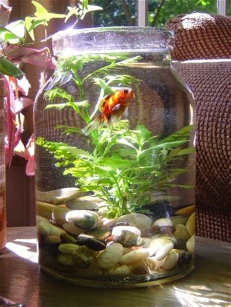 live themes jar turn your mason jar into a fish bowl jars bottles and