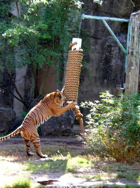 diy hanging scratching post petdiyscom