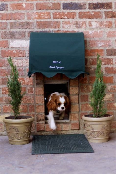 dog awning these diy hacks for spoiled dogs are either genius or insane