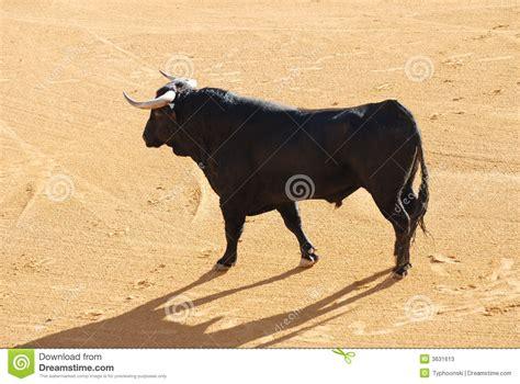 Sr Stir schwarzer stier in der arena stockbild bild 3631613