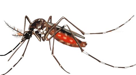 What Plants Keep Mosquitoes Away by Mosquito Repellent Clothing Reviews Does It Really Work