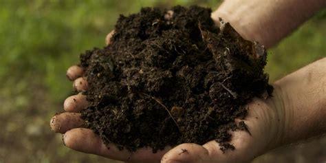 Pupuk Kompos Dan Pupuk Organik pupuk organik yang cocok untuk tanaman buah dan tabulot