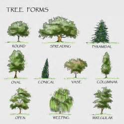 type of tree 25 best ideas about tree drawings on pinterest trees
