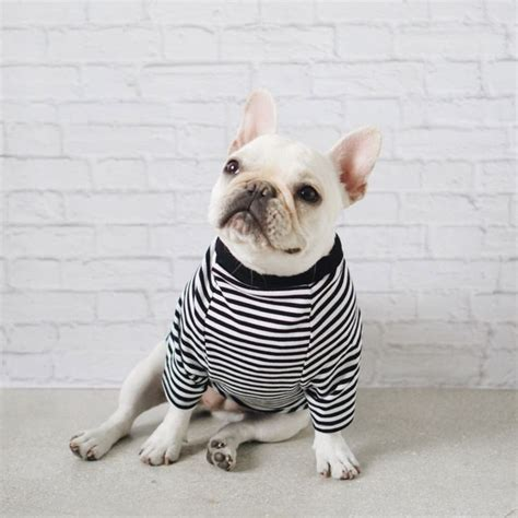 dog house clothing 17 best ideas about french bulldog clothes on pinterest french bulldog gifts dog