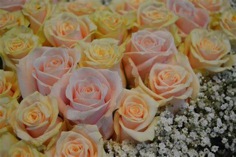 Zur Hochzeit Schenken by Blumen Zur Hochzeit Schenken