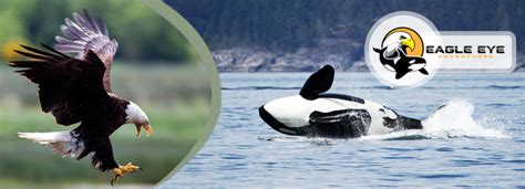 Senar Orca Eagle 50 M island daily deals coupons deals in nanaimo across vancouver island