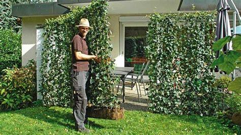 heckenpflanzen immergrün winterhart schnellwachsend 67 hecke als meterware blickdichte hecke in nur einem tag