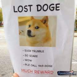 lost doge funny pictures