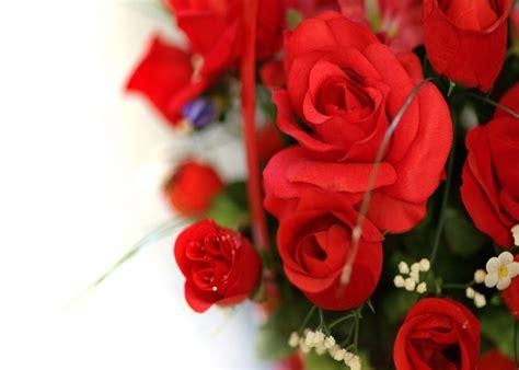 imagenes rojas tumblr wallpapers de rosas rojas fondos de pantalla