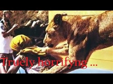 lion film list top 9 insane animal attack movies lion and tiger also