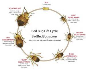 Life Cycle Of A Bed Bug Bed Bugs Pictures Stages Clipartsgram Com